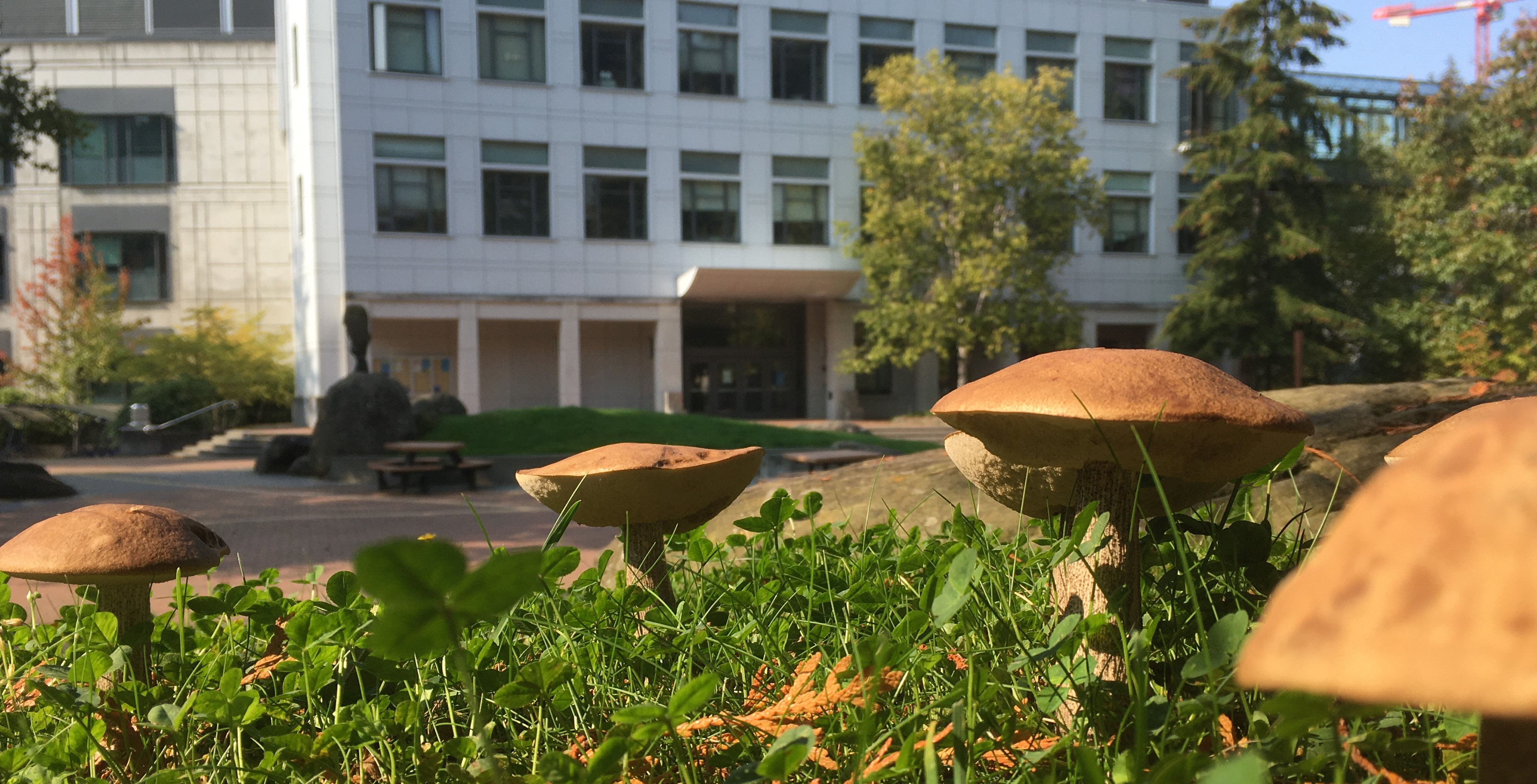 Boletus mushrooms with the Biology Building in the background.