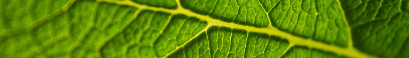 close up picture of leaf